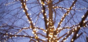 Families Can Sponsor Tree Lights on Midway Main Street